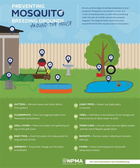 how to prevent mosquito breeding grounds around your house