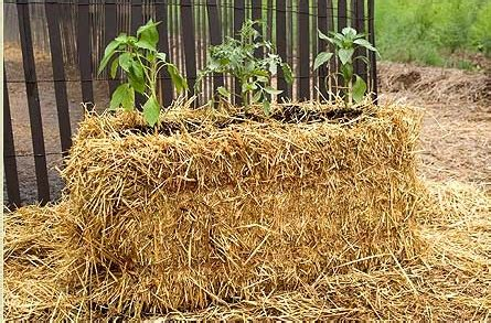 Planters Hay by Straw Bed Planter Garden Ideas
