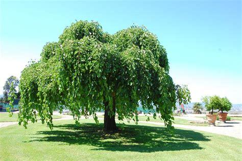 alberi giardino sei regole per un albero felice il nostro barganews