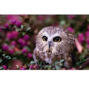 Description The Wallpaper Above Is Lovely Owl Eyes In
