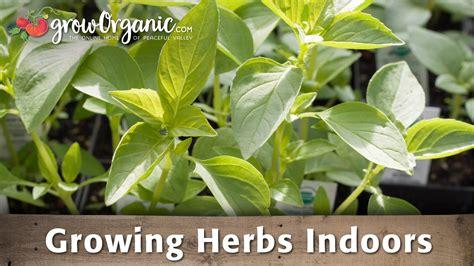 growing herbs indoors from seeds growing herbs indoors youtube