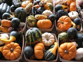 Types Of Garden Vegetables - homegrown gourd care how and when to plant gourds