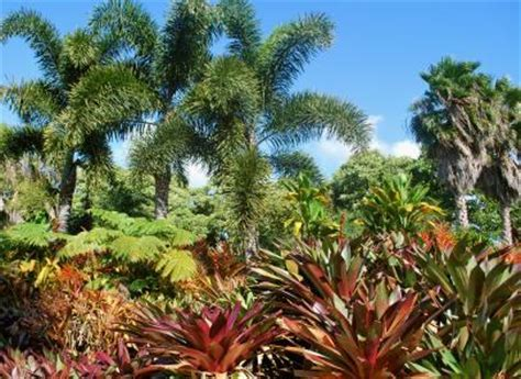 protect tropical plants   winter lovetoknow