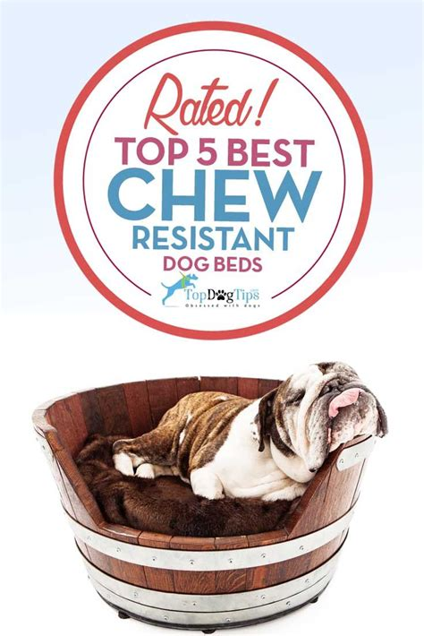 chew resistant dog beds top best chew resistant dog beds dog owners are often