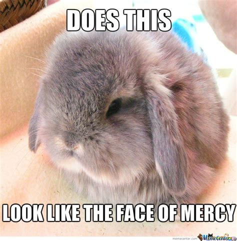 Rabbit Meme - 17 best images about bunnies on pinterest funny