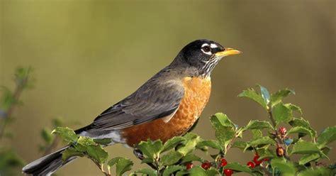 imagenes animales aves imagenes de animales aves