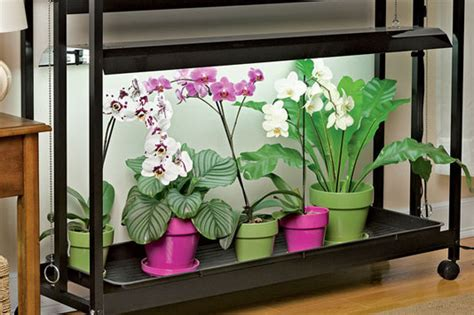 grow orchids growing orchids orchid care