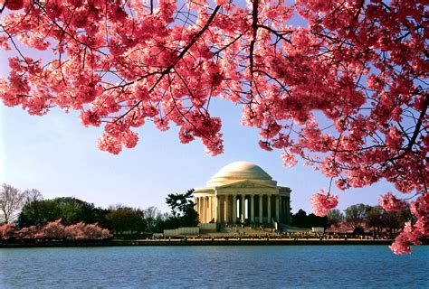 national cherry blossom festival time for fun most enchanting and vibrant festivals