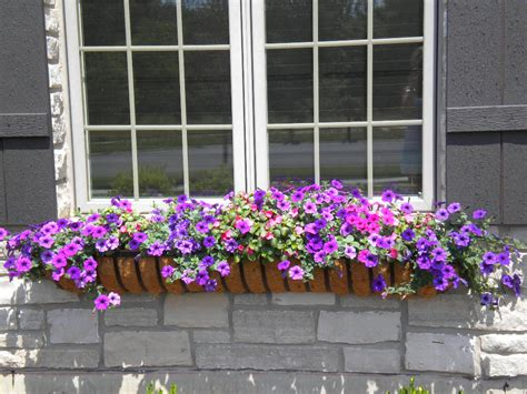 flowers window boxes our flowers window box contest