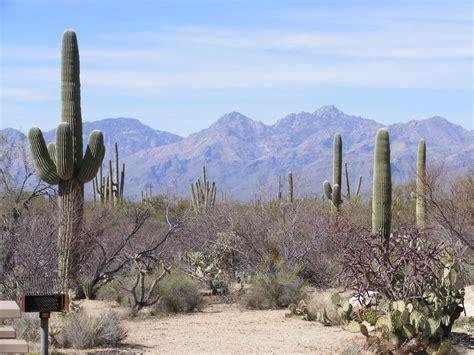 sonoran desert landscape www imgkid com the image kid