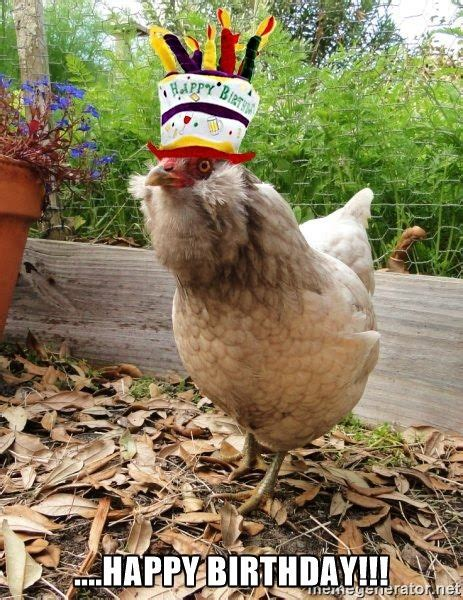 Hen Meme - happy birthday party hat chicken happy birthday
