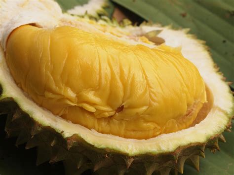 Bibit Durian Udang Merah orked dan violet durian at soon huat durian ang