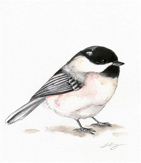 chickadee tattoo 1000 ideas about chickadee on bird