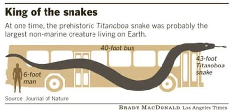 the history of the world in bite sized chunks books titanoboa snake facts