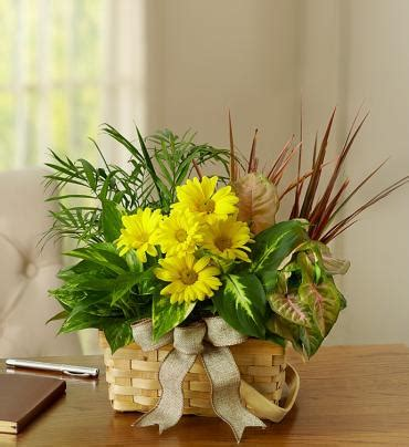 same day funeral flower delivery fromyouflowers dish garden with fresh cut flowers funeral flower