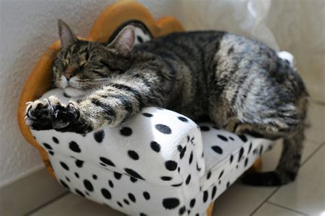 Cats And Leather Furniture by Pets And Leather Furniture How To Keep Your Leather