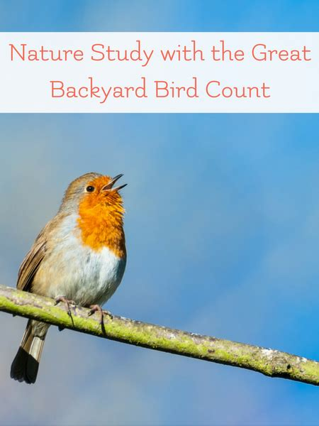 the great backyard bird watching and the great backyard bird count