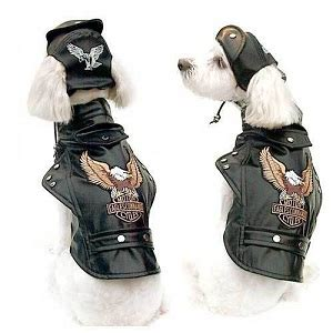 Motorcycle Apparel For Dogs by Motorcycles Rule Page 67 Bike Forums