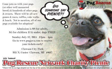 pug charity 22 best images about available pugs in rescue on