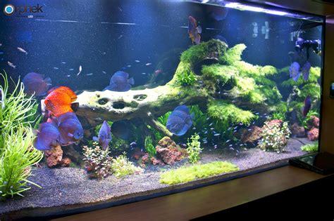 led aquarium lighting planted tank planted freshwater aquarium lighting orphek