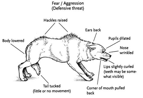 aggression in dogs fear aggression in dogs care facts