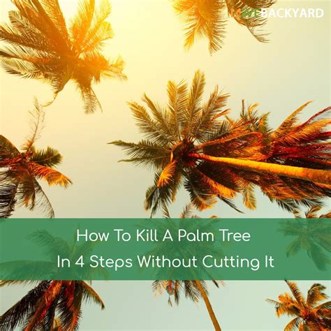 how to kill a bush how to kill a palm tree in 4 steps without cutting it apr