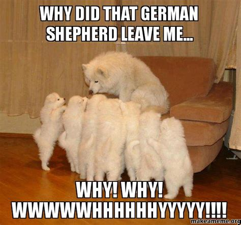 Funny German Memes - funny boxer dog memes dog breeds picture