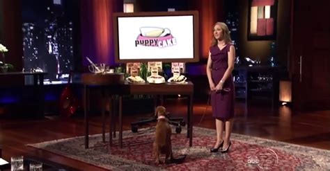 puppy cake shark tank 5 lessons you can learn from entrepreneurs on shark tank