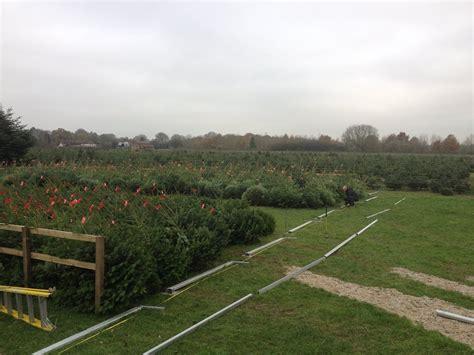28 best christmas tree farm newbury newbury christmas