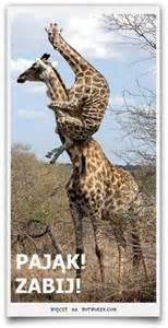 Giraffe Vase Animals Giraffes On Pinterest Giraffes Baby Giraffes