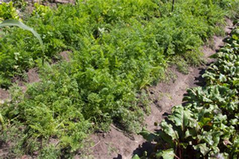 of all garden fertilizer organic is best