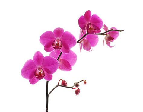 orchid pictures images and stock photos istock