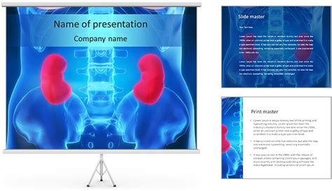 powerpoint templates kidney free kidneys problem powerpoint template backgrounds id