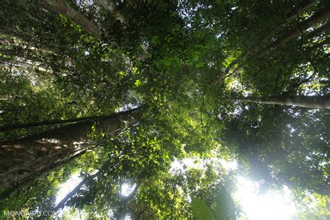 amazon video indonesia indonesian rainforest canopy