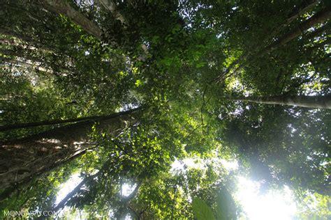 amazon indonesia indonesian rainforest canopy