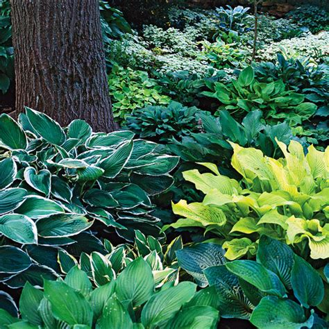 shade garden plants zone 5 perennials for shady gardens zone 9 orange county master