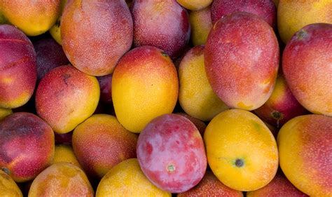 gets me mangoes books best mango recipes from miami pritikin weight loss