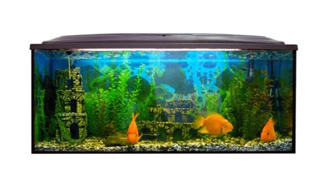 welche beleuchtung aquarium die richtige beleuchtung im aquarium rinderohr de