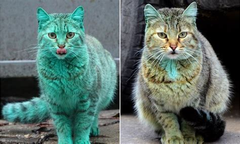 Green Cat the bright green cat whose appearance caused an uproar is