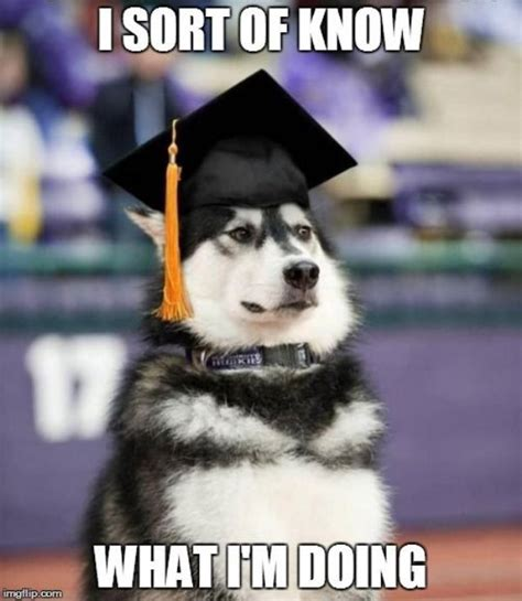 Graduation Meme - celebrate graduation with memes you probably already read