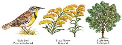 Louisiana State Bird And Flower - oes tours the usa louisiana book covers