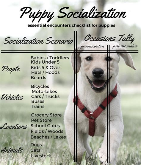 puppy socialization checklist how to socialize your labrador puppy the labrador site