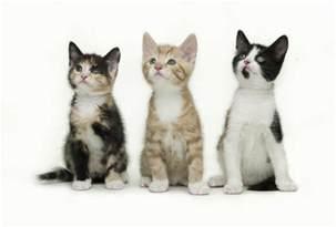 cat scratch disease can cuddling your cat kill you uk