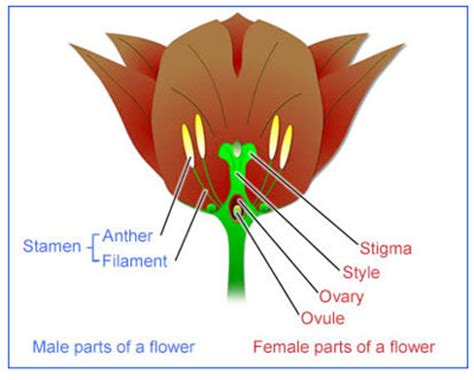 plant reproduction diagram reproduction and extinction 5c plants reproduction