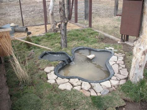 backyard duck ponds duck ponds on pinterest duck pond duck coop and duck house