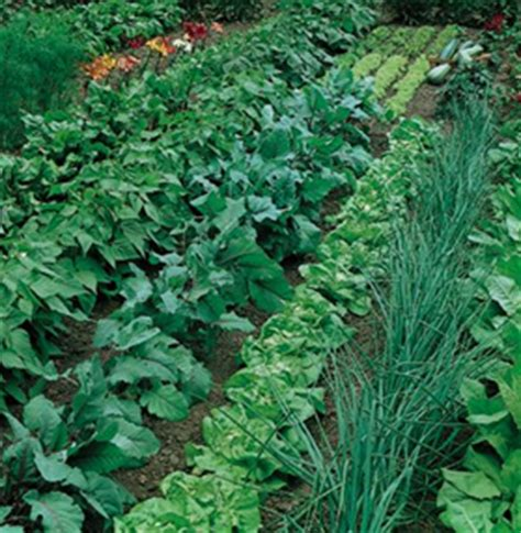 Using Crop Rotation In Home Vegetable Garden Wisconsin Crop Rotation Home Vegetable Garden