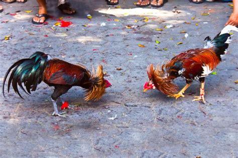 Zoologischer Garten Guadeloupe by Reisen Nach Guadeloupe Entdecken Sie Guadeloupe Mit