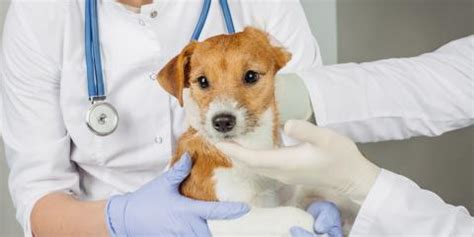 how often do puppies need to how often does your need a pet wellness florence veterinary hospital
