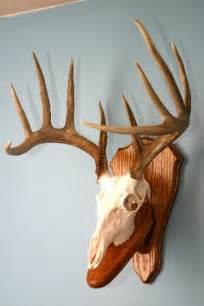 European Elk Mount Plaque » Home Design 2017