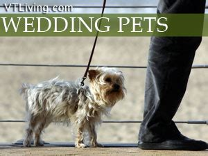 Wedding For Your Beloved Pet by Wedding Pets Dogs Cats Pets At Your Wedding Pets In